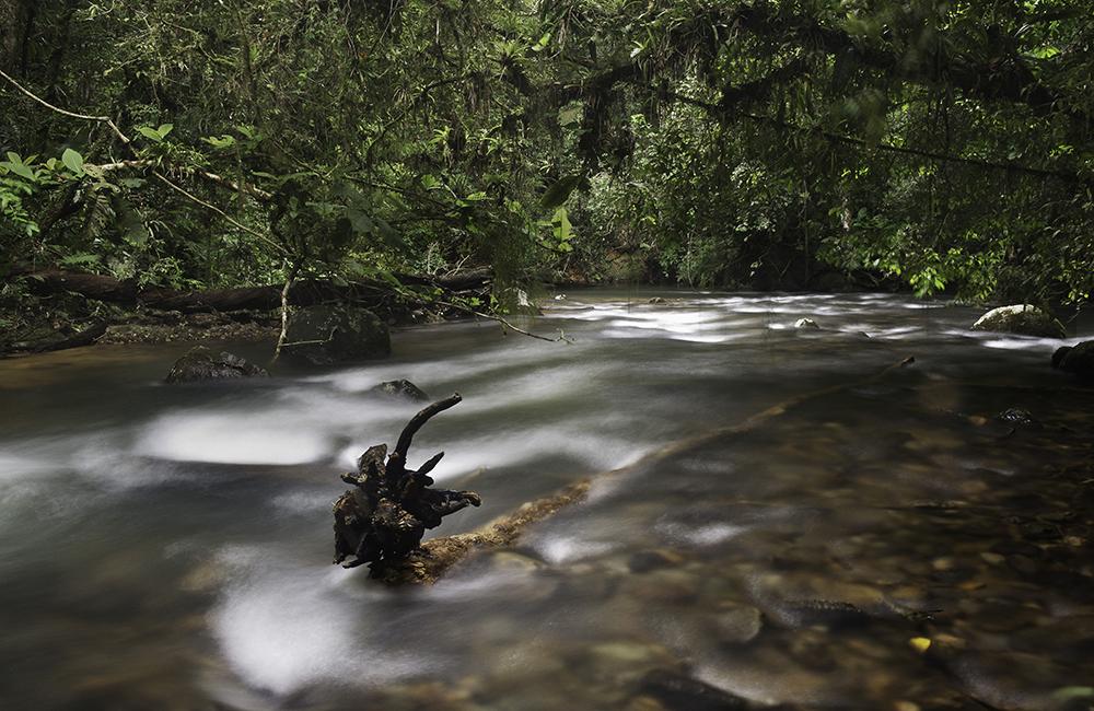 Foto de um rio em meio a mata com águas fortes. Um tronco saindo do centro esquerdo da imagem e indo na diagonal até o centro direito da foto, seguindo o sentido do rio. A Mata recobre o Rio, colocando um clima escuro e verde.