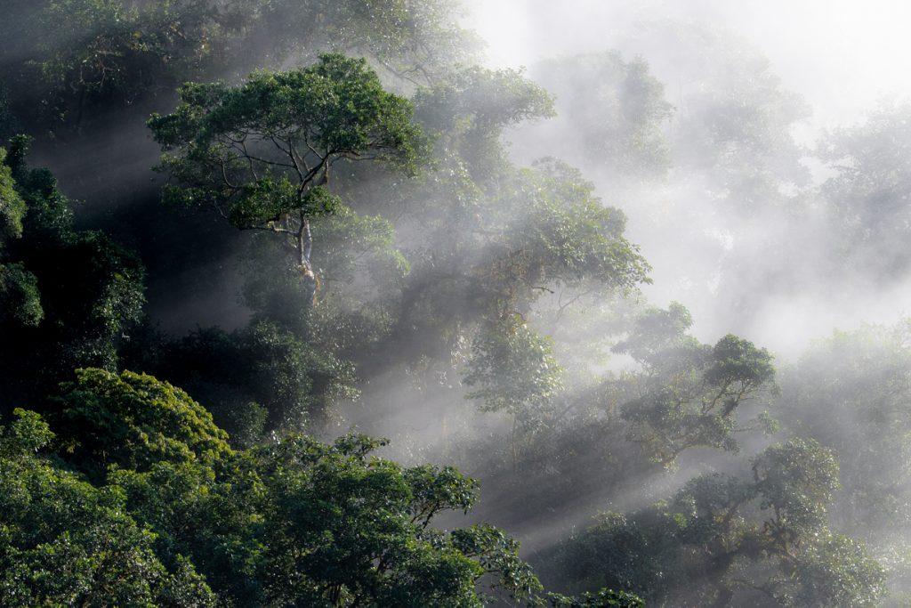 Imagem do Parque do Zizo durante o amanhecer. Mata fechada com neblina.
